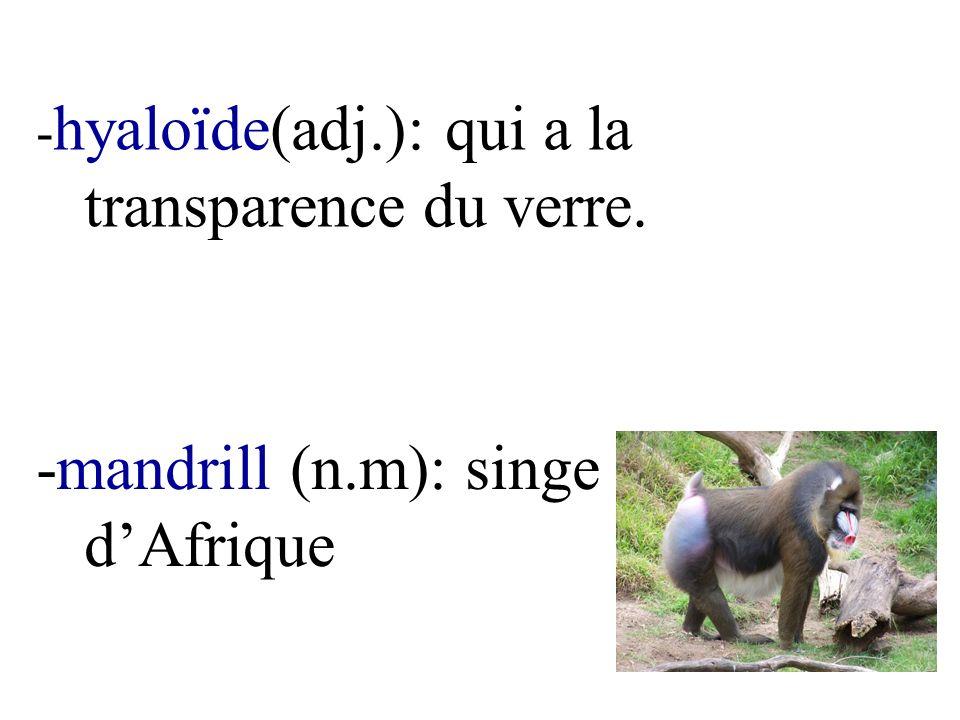 - hyaloïde(adj.): qui a la transparence du verre. -mandrill (n.m): singe dAfrique