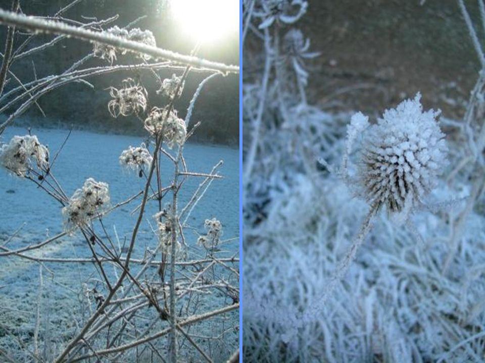 Chaque saison offre des joyaux éphémères comme, ces perles translucides formées par le givre en hiver.