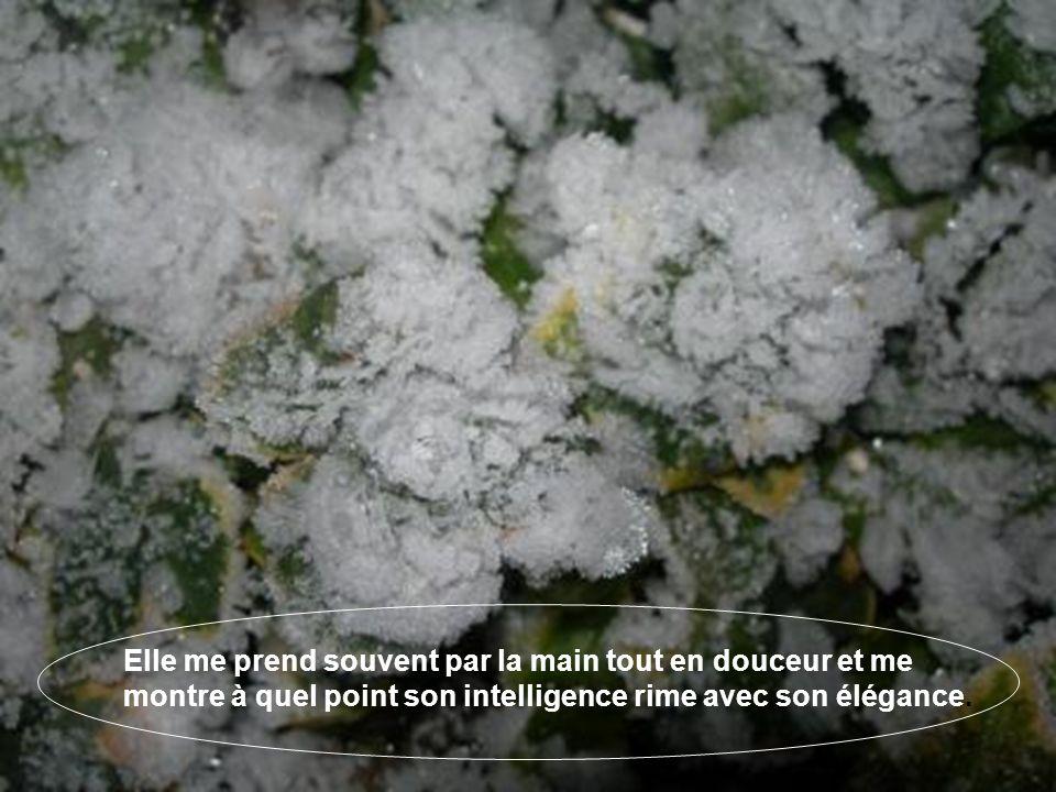 Comment ne pas imaginer lexistence dune déesse qui parsème allègrement ces paillettes de glace sur le manteau de verdure de ma pelouse.