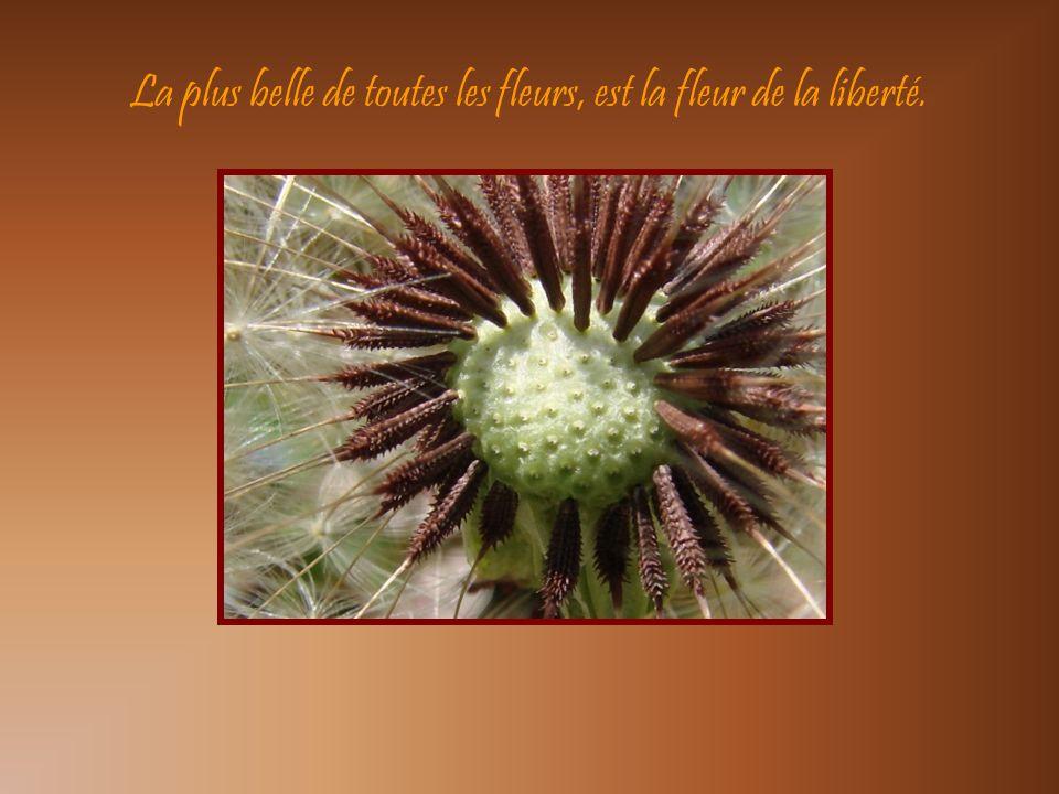 La plus belle de toutes les fleurs, est la fleur de la liberté.