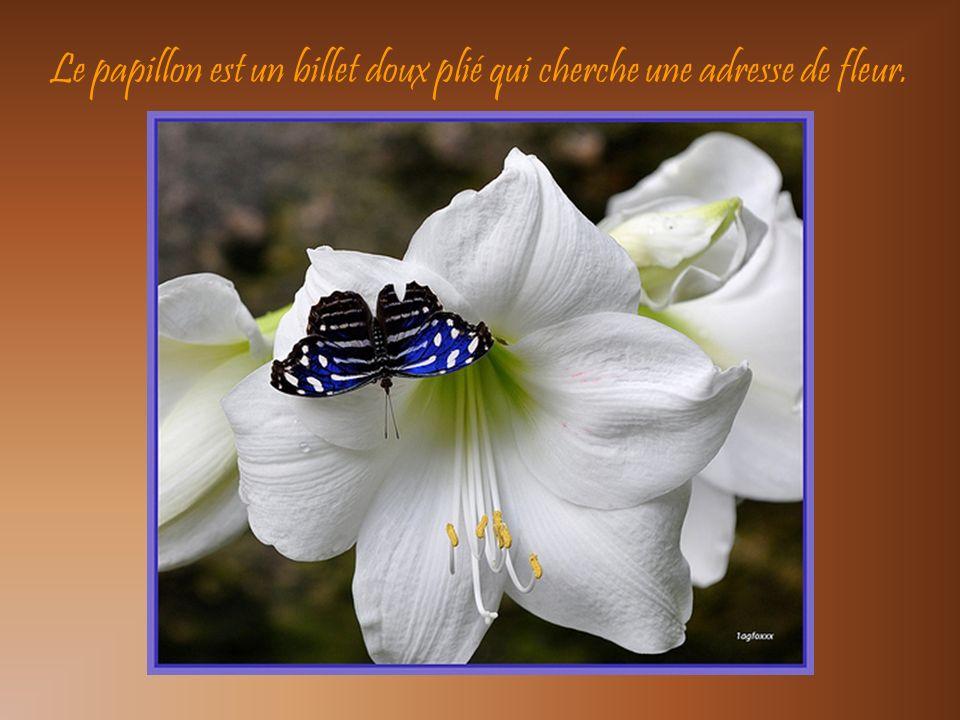 Un grain de poussière ne souille pas une fleur.