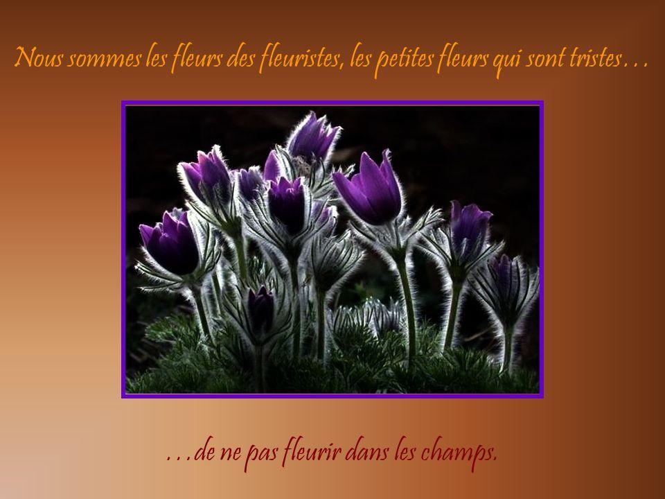 Les fleurs du printemps sont les rêves de lhiver, … …racontés le matin à la table des anges.