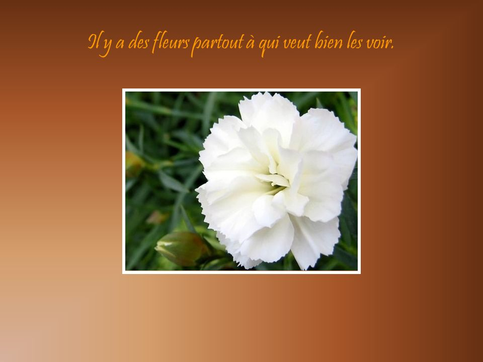 Nous sommes les fleurs des fleuristes, les petites fleurs qui sont tristes… …de ne pas fleurir dans les champs.