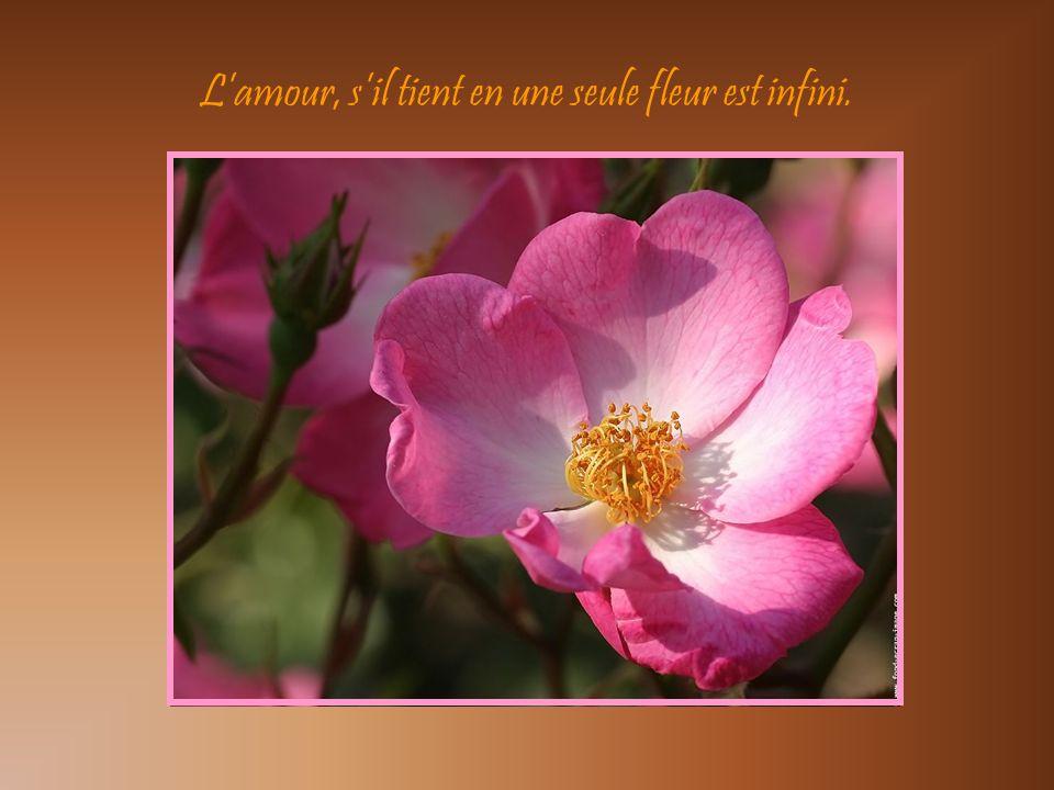 Soit comme la fleur, épanouis toi librement… … et laisse les abeilles dévaliser ton cœur…