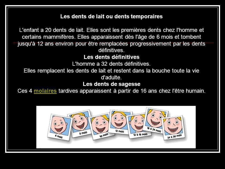 Les dents de lait ou dents temporaires L'enfant a 20 dents de lait. Elles sont les premières dents chez l'homme et certains mammifères. Elles apparais