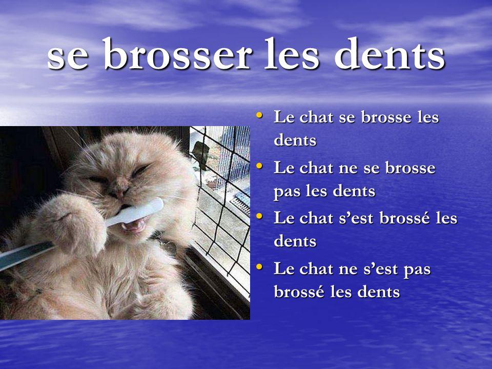 se brosser les dents Le chat se brosse les dents Le chat se brosse les dents Le chat ne se brosse pas les dents Le chat ne se brosse pas les dents Le chat sest brossé les dents Le chat sest brossé les dents Le chat ne sest pas brossé les dents Le chat ne sest pas brossé les dents