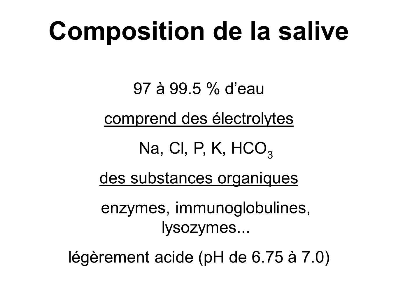 97 à 99.5 % deau comprend des électrolytes Na, Cl, P, K, HCO 3 des substances organiques enzymes, immunoglobulines, lysozymes...