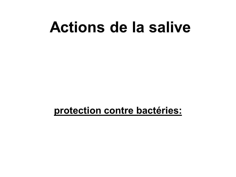 protection contre bactéries: Actions de la salive