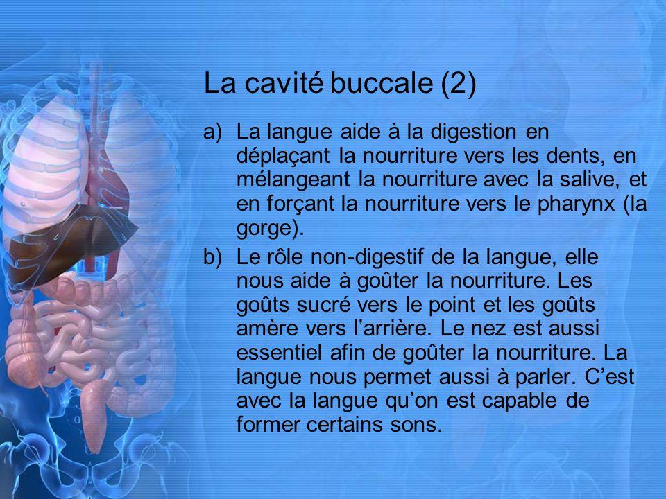 La cavité buccale (3) a)La salive est une solution légèrement alcaline contenant leau et lamylase.