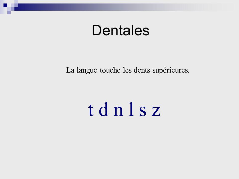 Dentales La langue touche les dents supérieures. t d n l s z