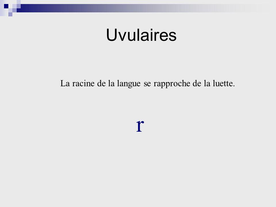 Uvulaires La racine de la langue se rapproche de la luette. r