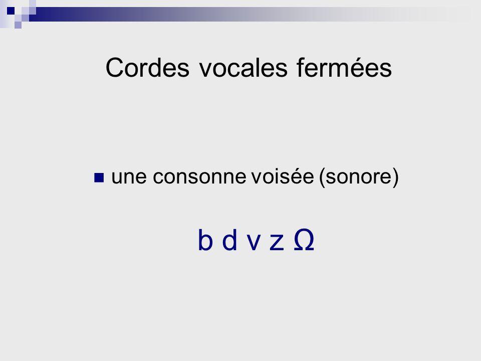 une consonne voisée (sonore) b d v z Cordes vocales fermées