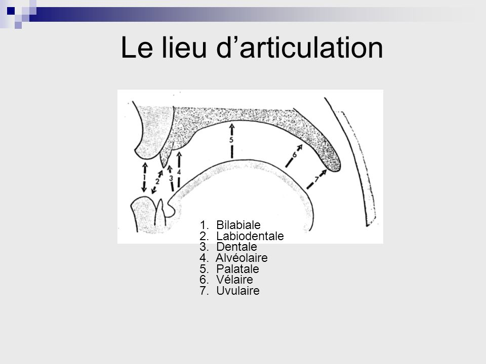 Le lieu darticulation 1. Bilabiale 2. Labiodentale 3. Dentale 4. Alvéolaire 5. Palatale 6. Vélaire 7. Uvulaire