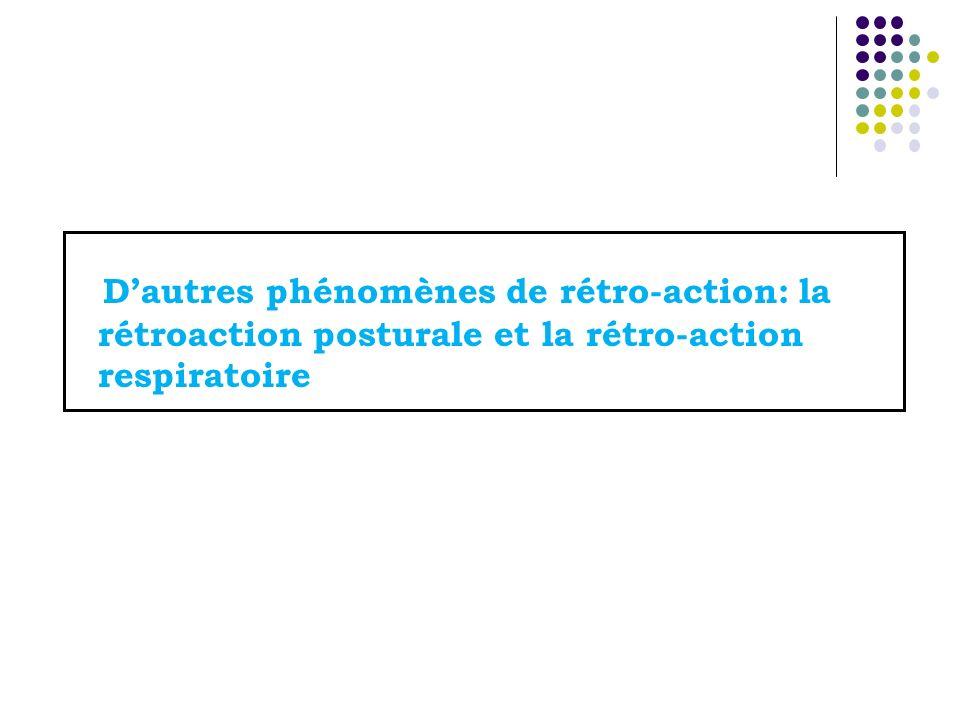 Dautres phénomènes de rétro-action: la rétroaction posturale et la rétro-action respiratoire