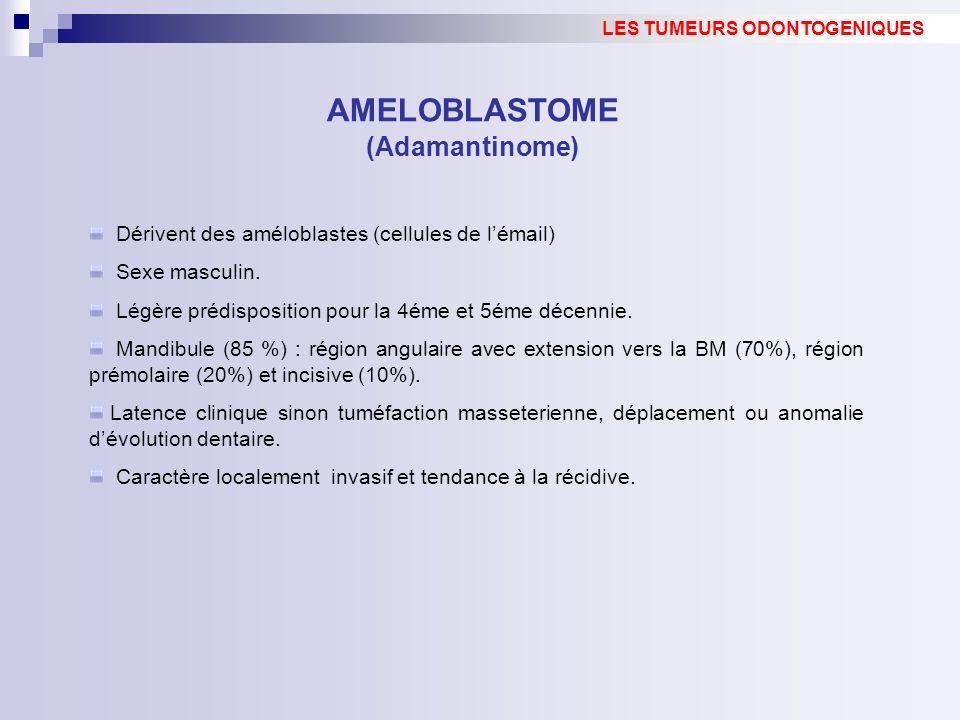 Dérivent des améloblastes (cellules de lémail) Sexe masculin. Légère prédisposition pour la 4éme et 5éme décennie. Mandibule (85 %) : région angulaire