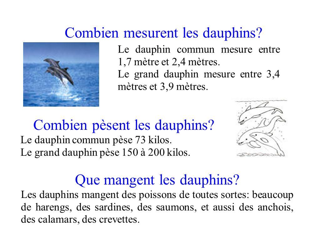 Combien mesurent les dauphins? Le dauphin commun mesure entre 1,7 mètre et 2,4 mètres. Le grand dauphin mesure entre 3,4 mètres et 3,9 mètres. Combien