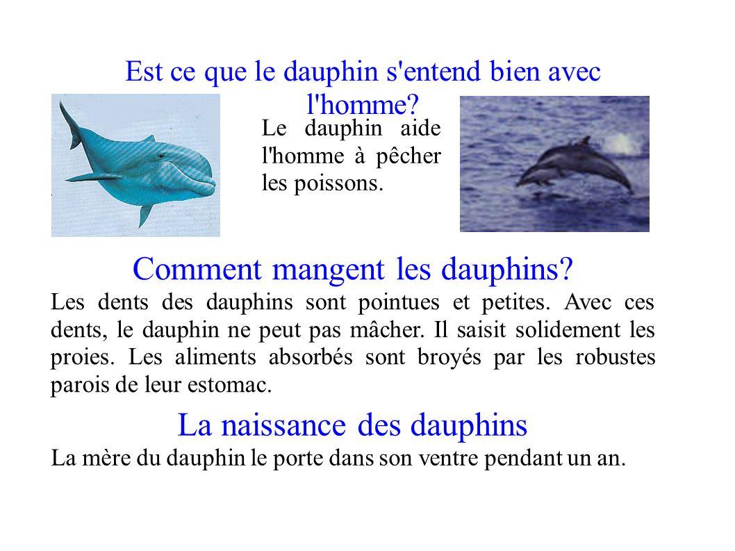 Est ce que le dauphin s'entend bien avec l'homme? Le dauphin aide l'homme à pêcher les poissons. La naissance des dauphins La mère du dauphin le porte