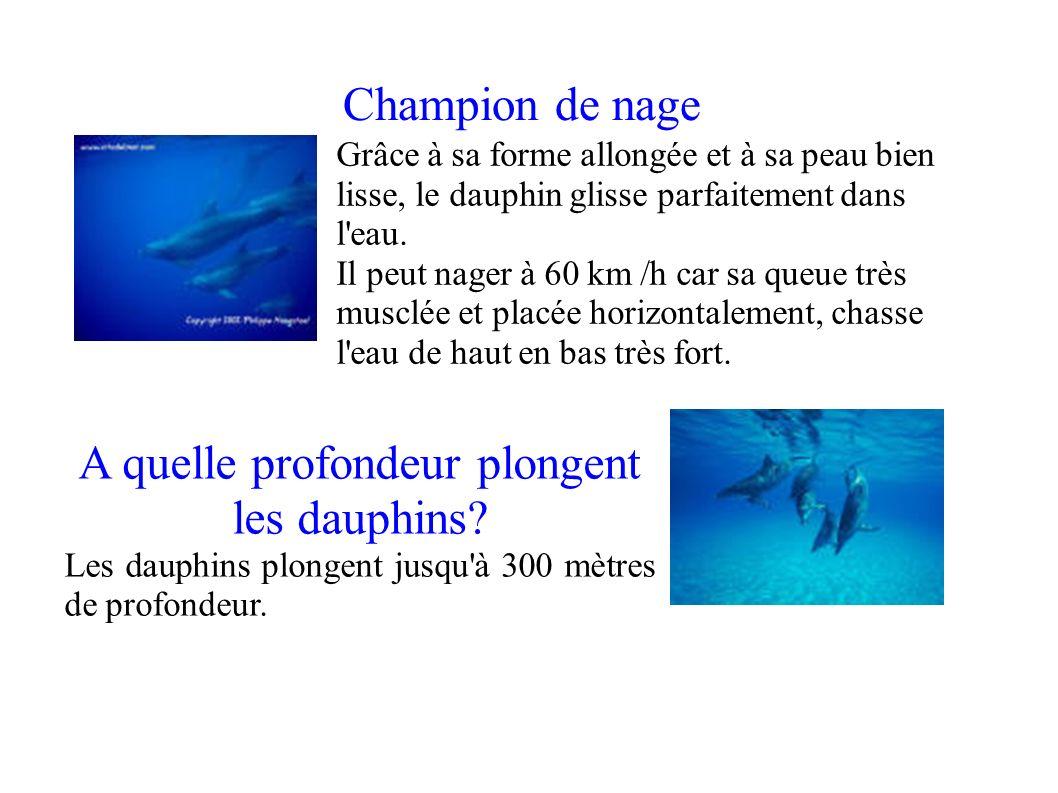 Champion de nage A quelle profondeur plongent les dauphins? Les dauphins plongent jusqu'à 300 mètres de profondeur. Grâce à sa forme allongée et à sa