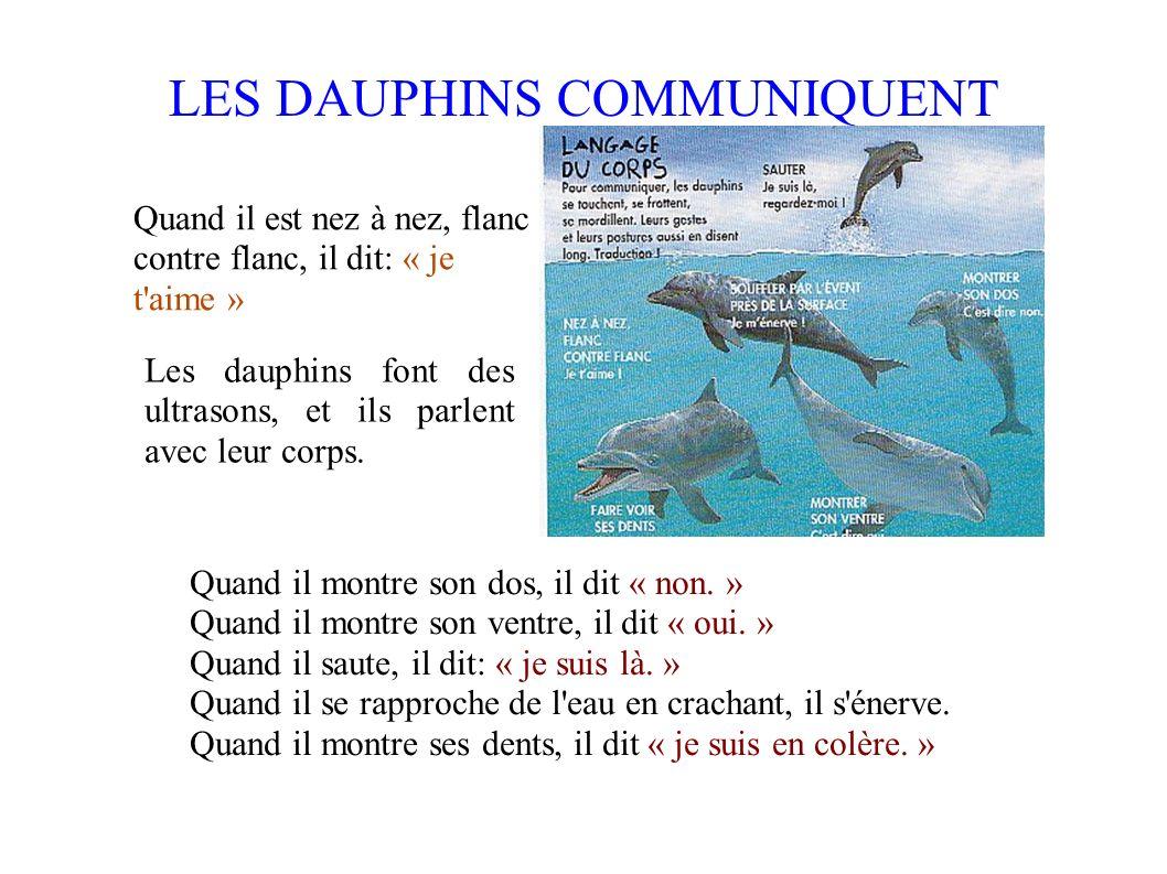 Voir sous l eau Les ultrasons bondissent sur les poissons, sur les rochers, et reviennent aux dauphins pour leur indiquer où ils se trouvent.