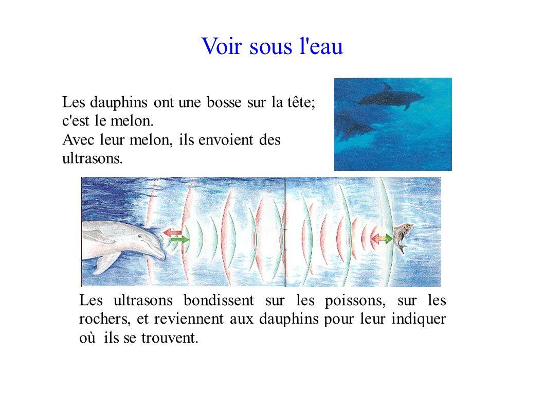Voir sous l'eau Les ultrasons bondissent sur les poissons, sur les rochers, et reviennent aux dauphins pour leur indiquer où ils se trouvent. Les daup