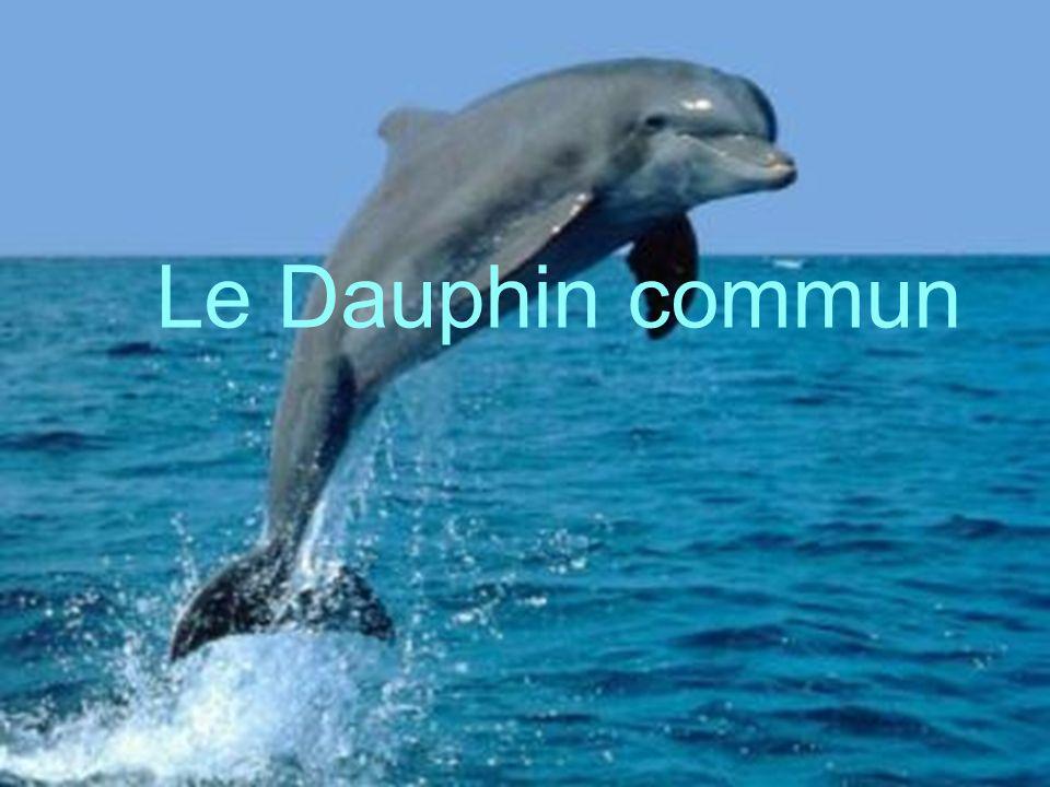 Le Dauphin commun