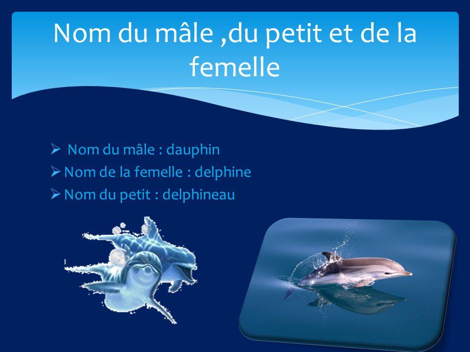 Nom du mâle : dauphin Nom de la femelle : delphine Nom du petit : delphineau Nom du mâle,du petit et de la femelle