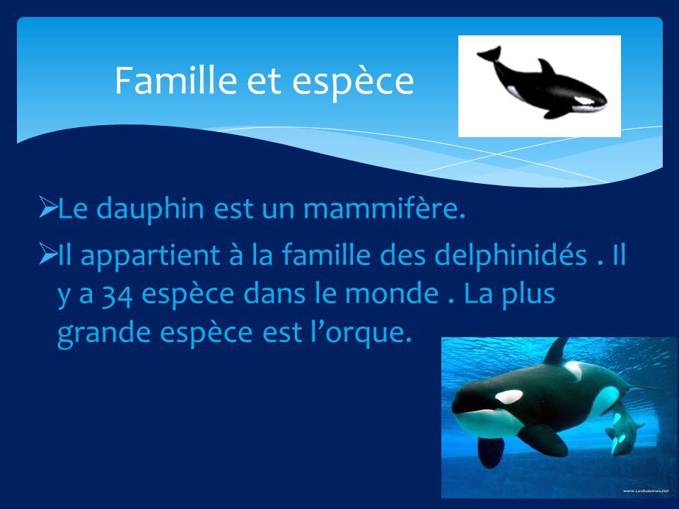 Le dauphin est un mammifère.Il appartient à la famille des delphinidés.