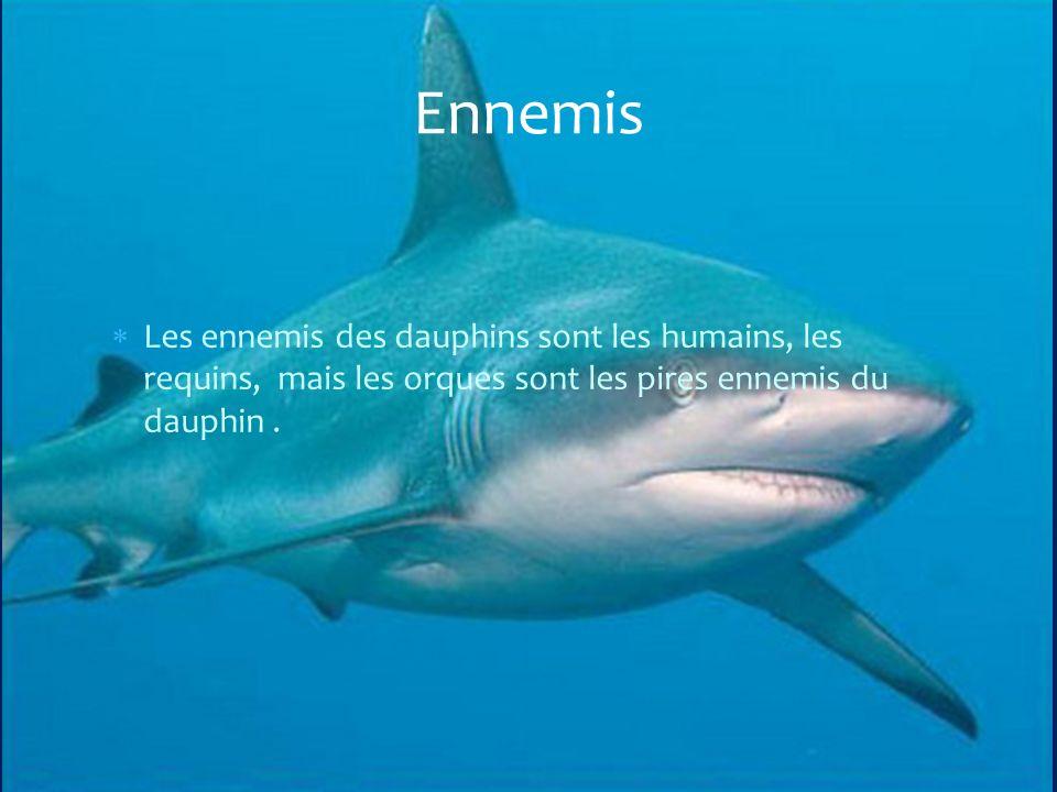 Les ennemis des dauphins sont les humains, les requins, mais les orques sont les pires ennemis du dauphin.