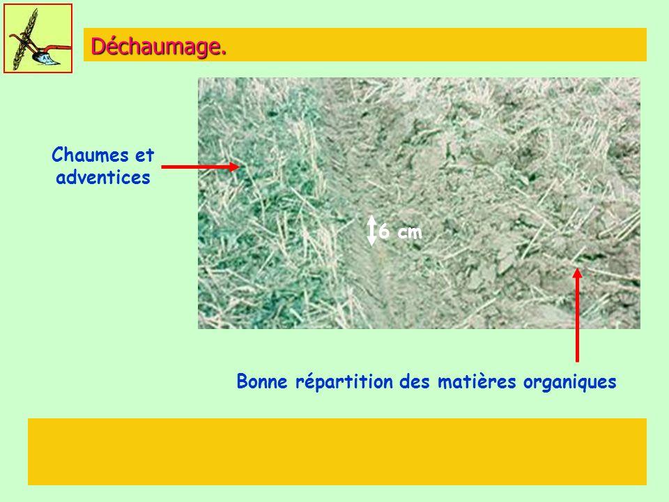 Déchaumage. Chaumes et adventices Bonne répartition des matières organiques 6 cm