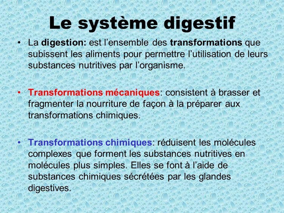 Le système digestif La bouche : la mastication qui déchiquette la nourriture avec les dents Linsalivation imprègne la nourriture de salive, ce qui permet aux enzymes de commencer à briser les chaines damidon (chaines de glucides) Le pharynx : La déglutition: action davaler de la nourriture (bol alimentaire) Dans la salive, il y a des enzymes: lamylase salivaire