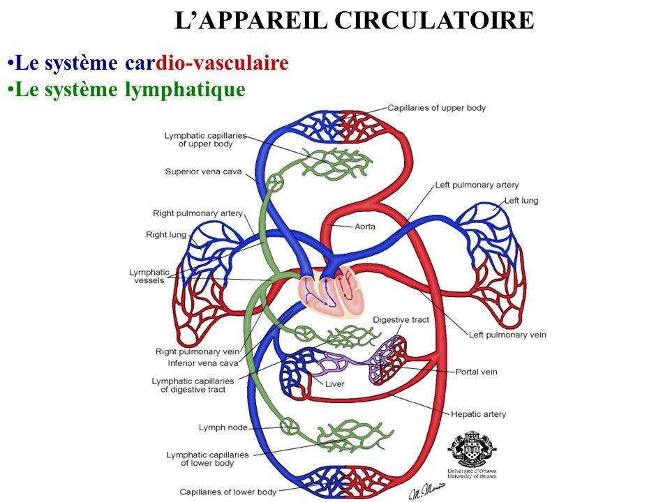 LAPPAREIL CIRCULATOIRE Le système cardio-vasculaire Le système lymphatique