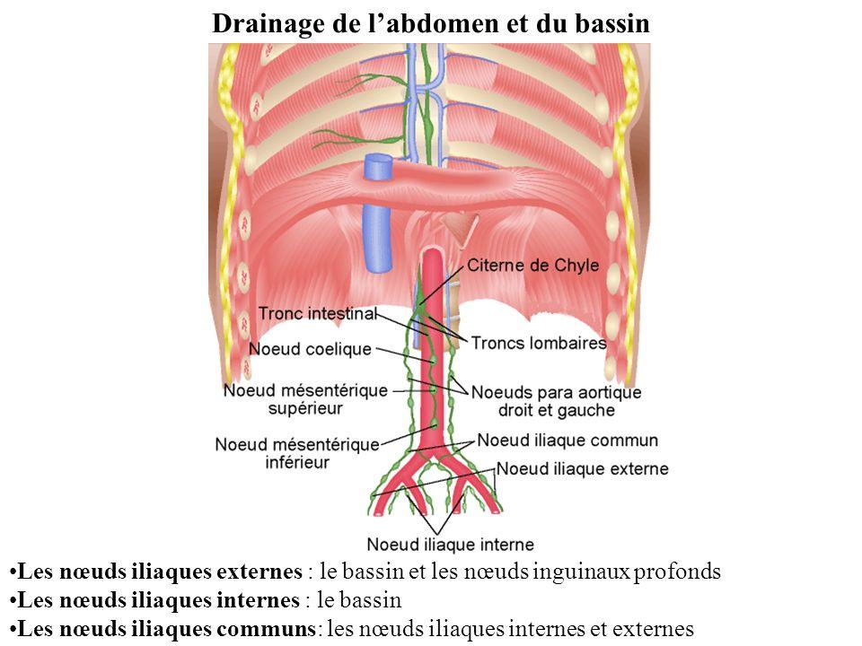 Les nœuds iliaques externes : le bassin et les nœuds inguinaux profonds Les nœuds iliaques internes : le bassin Les nœuds iliaques communs: les nœuds iliaques internes et externes Drainage de labdomen et du bassin