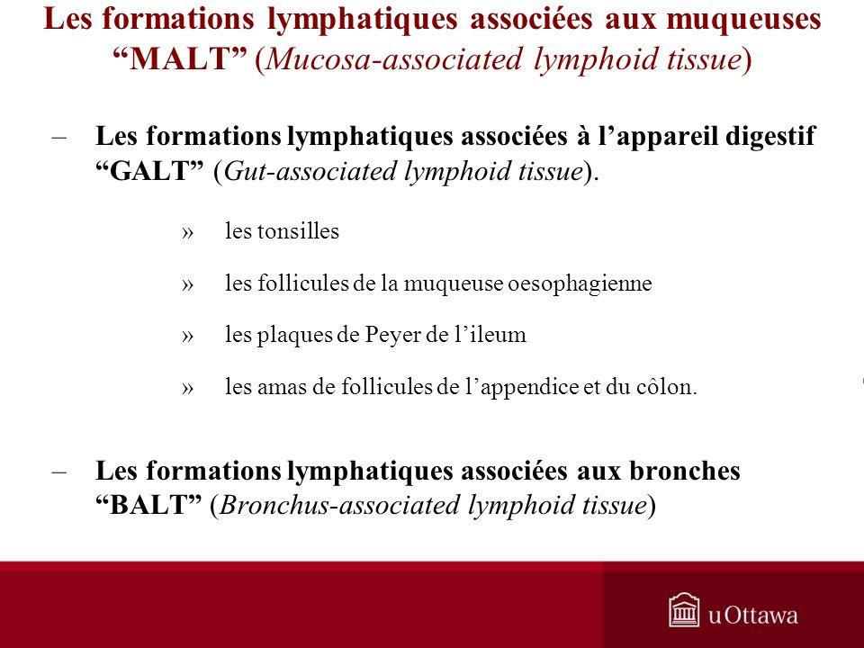 Les formations lymphatiques associées aux muqueuses MALT (Mucosa-associated lymphoid tissue) –Les formations lymphatiques associées à lappareil digestif GALT (Gut-associated lymphoid tissue).