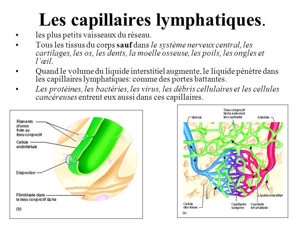 Les capillaires lymphatiques.les plus petits vaisseaux du réseau.