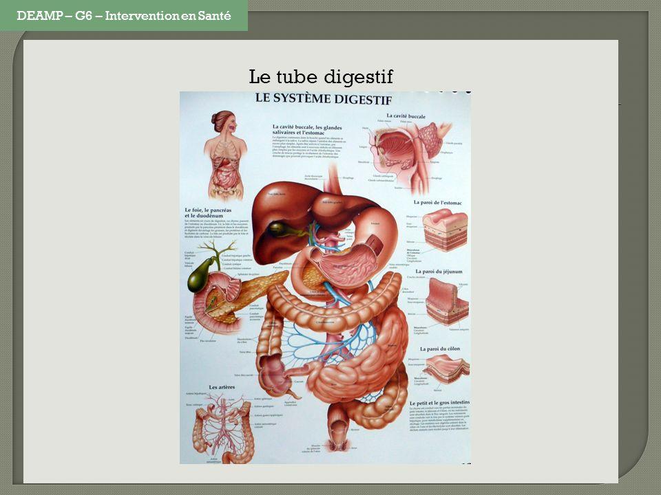 Le tube digestif DEAMP – G6 – Intervention en Santé