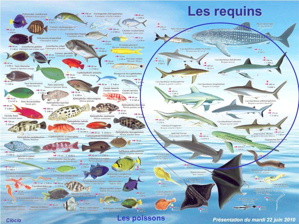 Les poissons sont des animaux vertébrés aquatiques à sang froid, avec des branchies pour respirer, pourvus de nageoires, et dont le corps est le plus souvent couvert décailles.