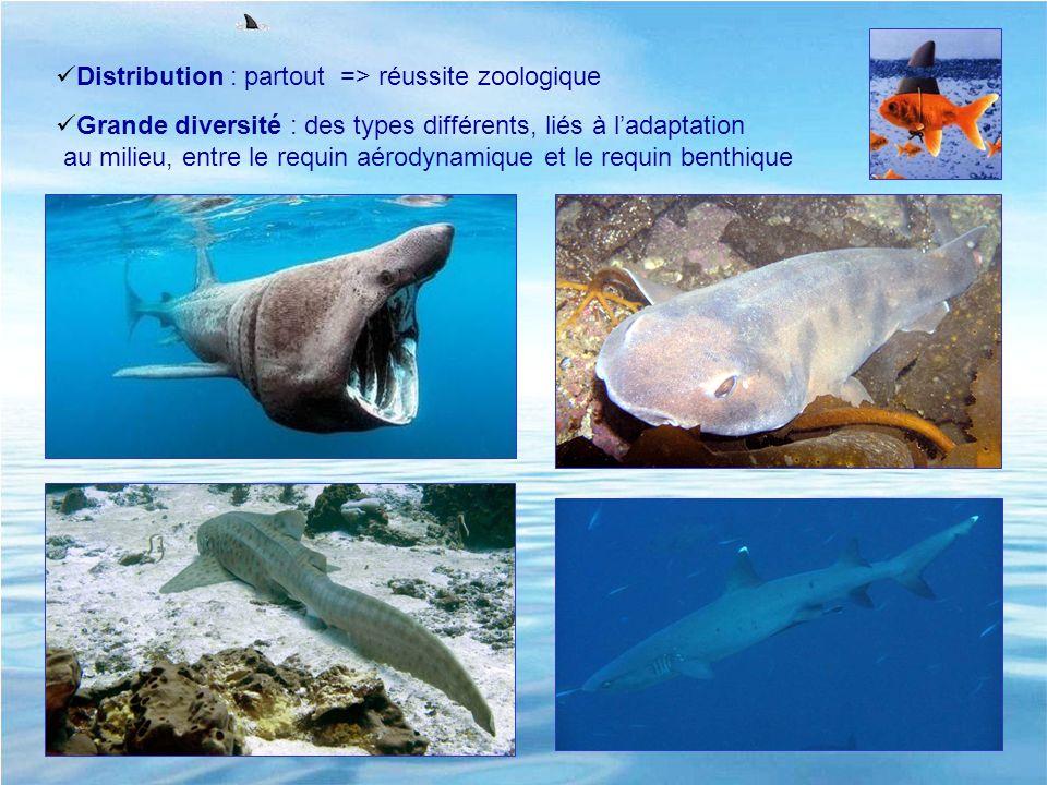 Distribution : partout => réussite zoologique Grande diversité : des types différents, liés à ladaptation au milieu, entre le requin aérodynamique et