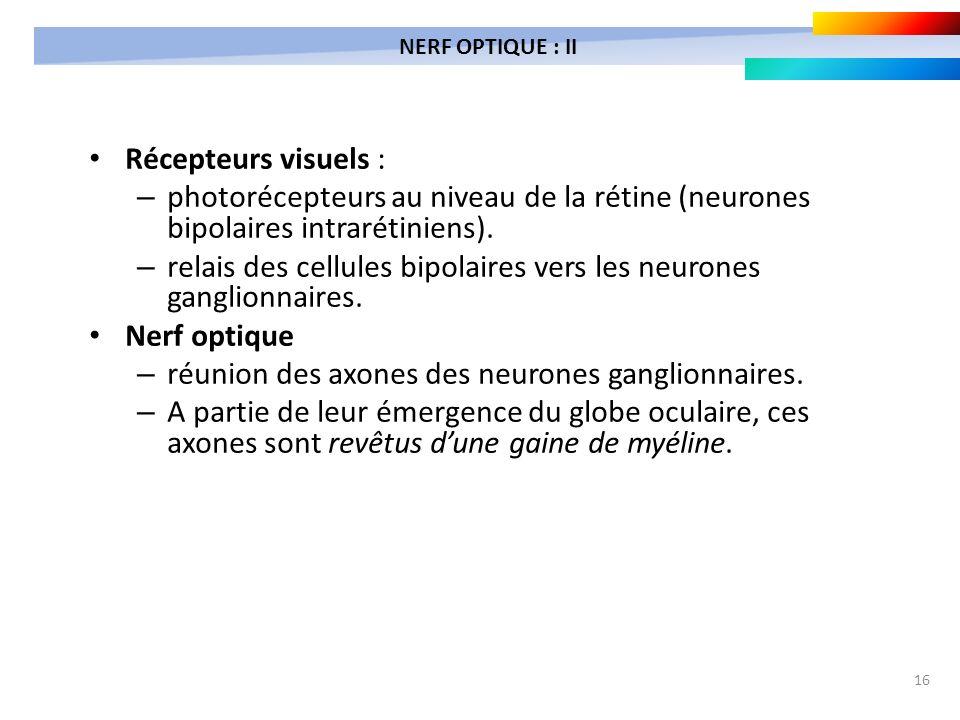 16 Récepteurs visuels : – photorécepteurs au niveau de la rétine (neurones bipolaires intrarétiniens). – relais des cellules bipolaires vers les neuro