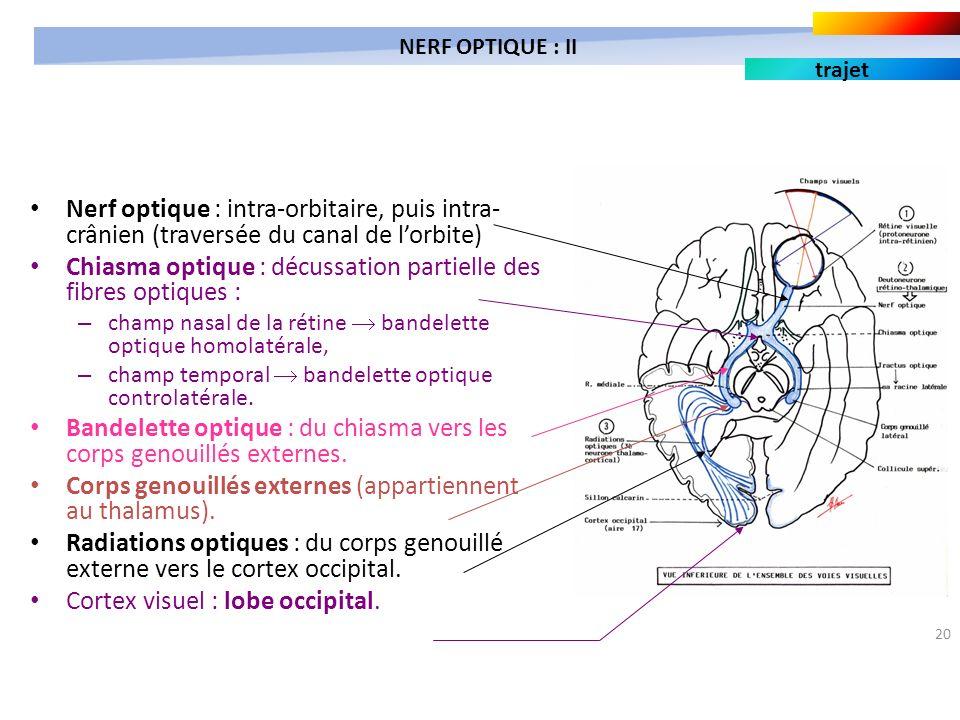 20 Nerf optique : intra-orbitaire, puis intra- crânien (traversée du canal de lorbite) Chiasma optique : décussation partielle des fibres optiques : –
