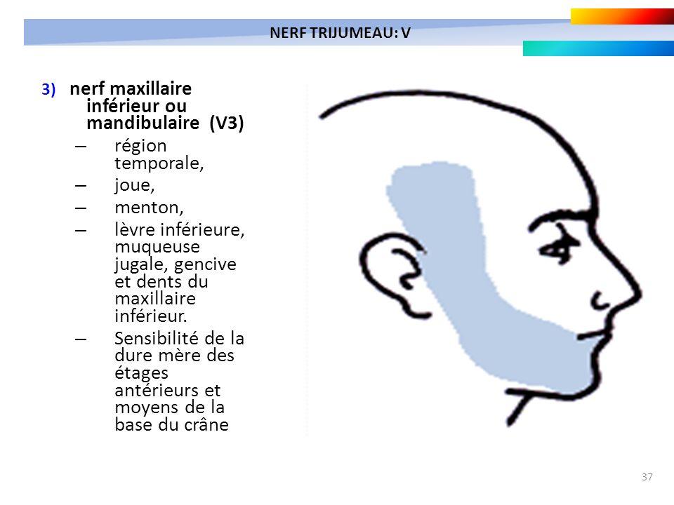 37 3) nerf maxillaire inférieur ou mandibulaire (V3) – région temporale, – joue, – menton, – lèvre inférieure, muqueuse jugale, gencive et dents du ma