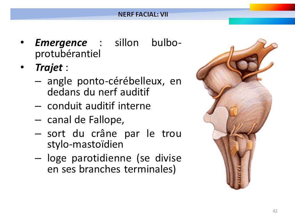 42 Emergence : sillon bulbo- protubérantiel Trajet : – angle ponto-cérébelleux, en dedans du nerf auditif – conduit auditif interne – canal de Fallope