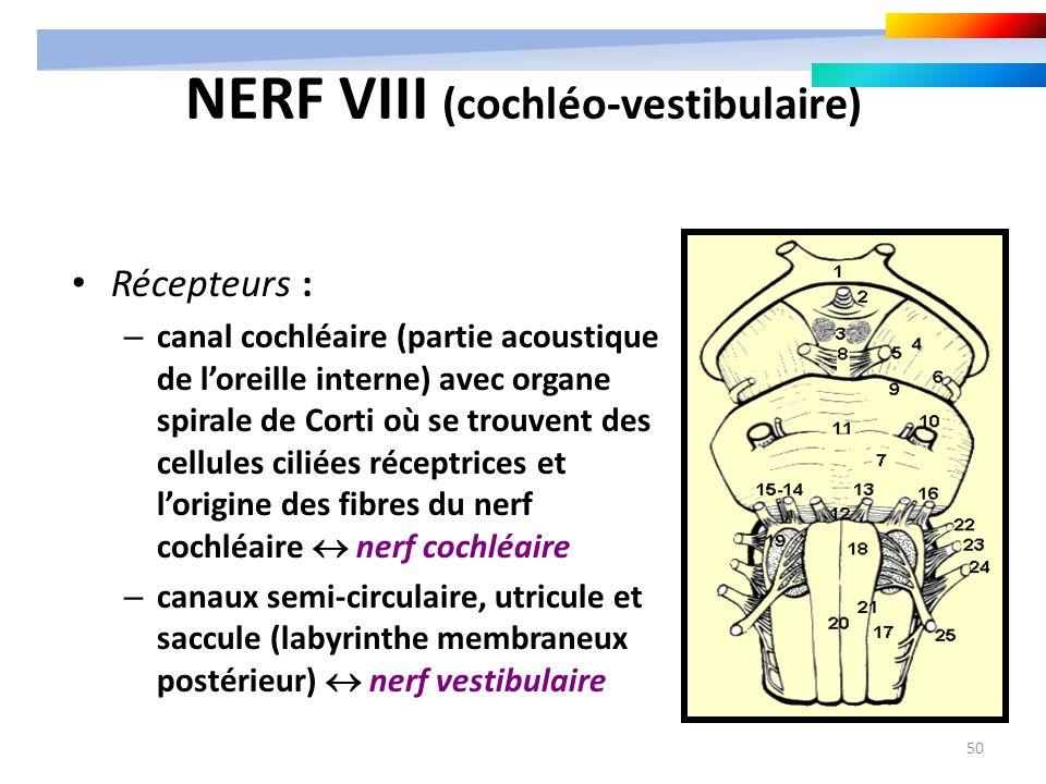 50 NERF VIII (cochléo-vestibulaire) Récepteurs : – canal cochléaire (partie acoustique de loreille interne) avec organe spirale de Corti où se trouven
