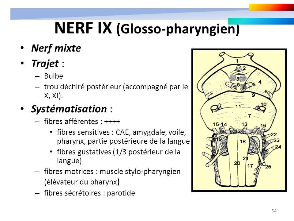 54 NERF IX (Glosso-pharyngien) Nerf mixte Trajet : – Bulbe – trou déchiré postérieur (accompagné par le X, XI). Systématisation : – fibres afférentes