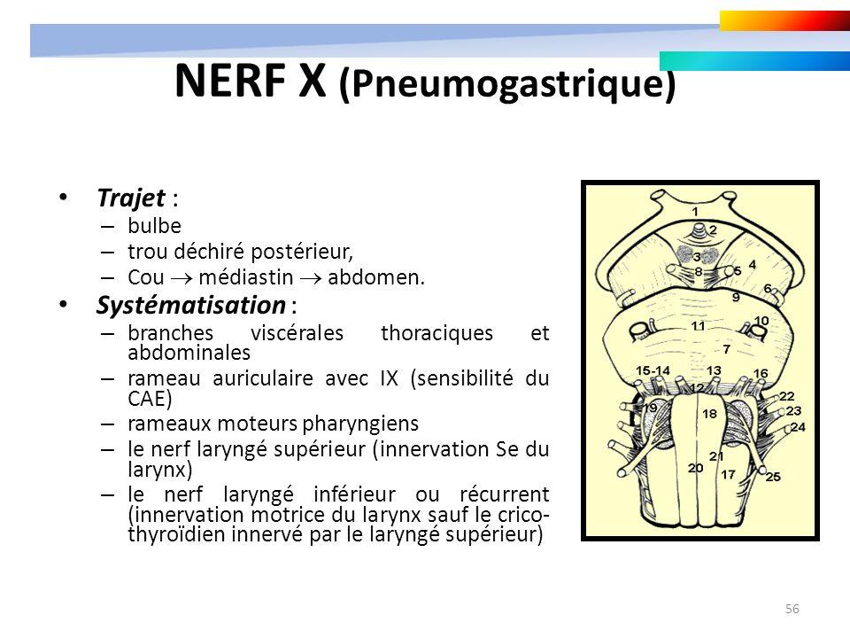 56 NERF X (Pneumogastrique) Trajet : – bulbe – trou déchiré postérieur, – Cou médiastin abdomen. Systématisation : – branches viscérales thoraciques e