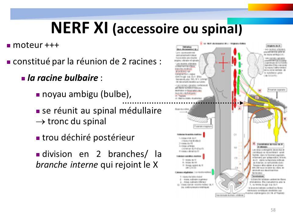 58 moteur +++ constitué par la réunion de 2 racines : la racine bulbaire : noyau ambigu (bulbe), se réunit au spinal médullaire tronc du spinal trou d