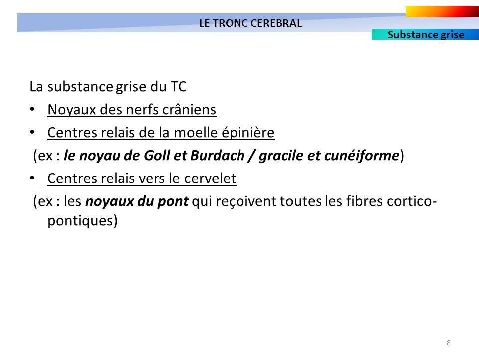 8 La substance grise du TC Noyaux des nerfs crâniens Centres relais de la moelle épinière (ex : le noyau de Goll et Burdach / gracile et cunéiforme) C