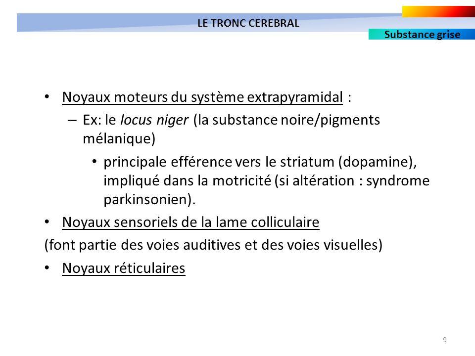 9 Noyaux moteurs du système extrapyramidal : – Ex: le locus niger (la substance noire/pigments mélanique) principale efférence vers le striatum (dopam