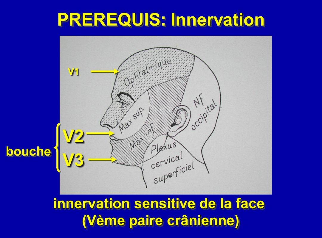 V3V3 V2V2 V1V1 bouchebouche innervation sensitive de la face (Vème paire crânienne) innervation sensitive de la face (Vème paire crânienne) PREREQUIS: