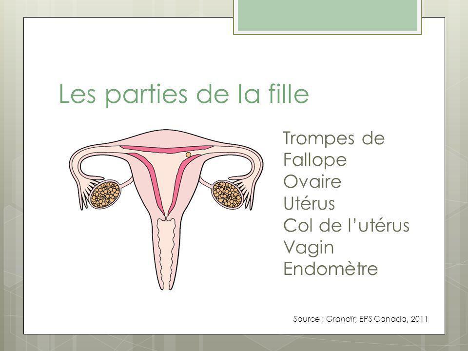 Les parties de la fille Trompes de Fallope Ovaire Utérus Col de lutérus Vagin Endomètre Source : Grandir, EPS Canada, 2011