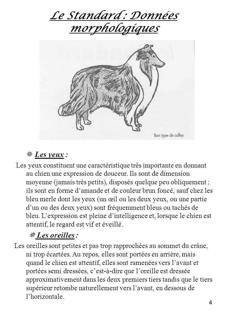 4 Le Standard : Données morphologiques Les yeux : Les yeux constituent une caractéristique très importante en donnant au chien une expression de douce
